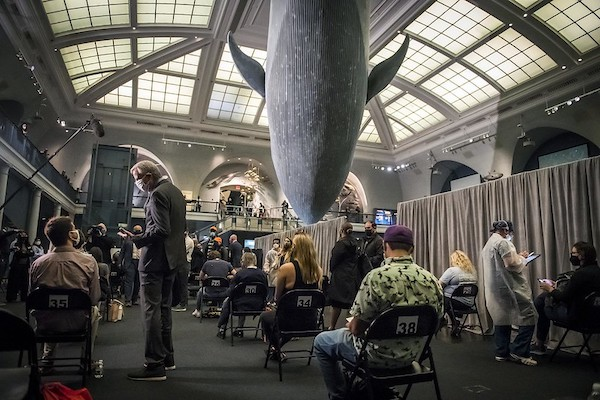 museum-of-natural-history-has-found-a-whale-of-a-way-to-make-covid-vaccines-fun.jpg