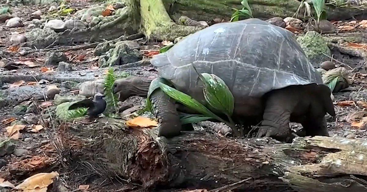tortoisehunting.jpg